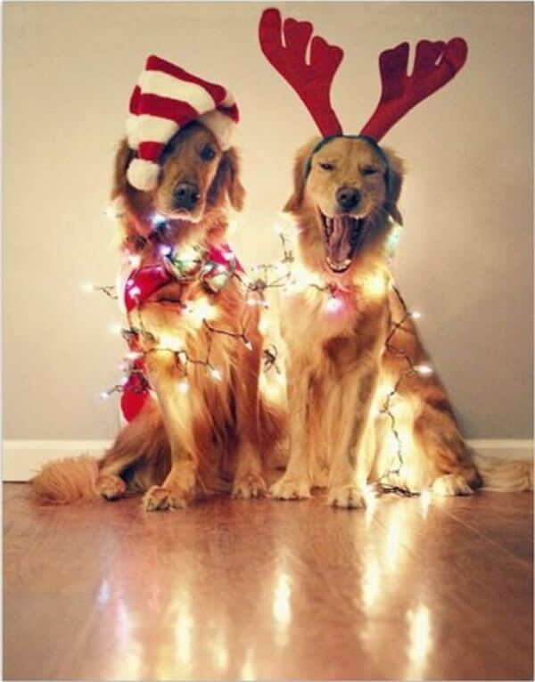 Christmas holiday lights on dogs