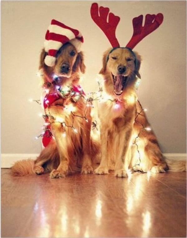 Christmas holiday lights on dogs