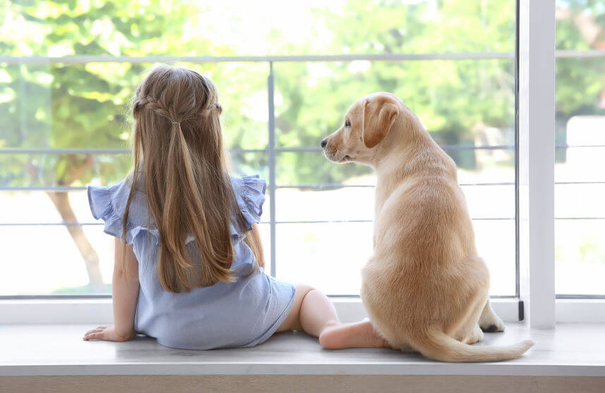 child-and-dog-at-window